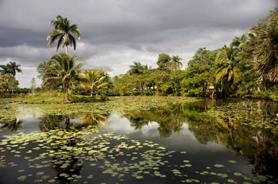 Boca de Guama, Cienaga de Zapata, Cuba.