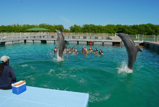 Swim with dolphins, Cayo Coco and Cayo Guillermo