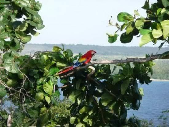 Cayo Saetia, Holguin, Cuba