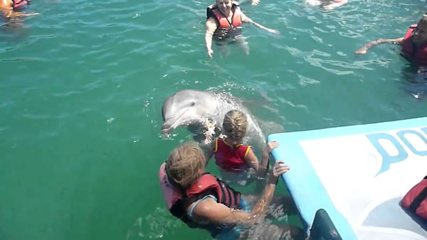 Swimming with dolphins, Guardalavaca, Holguin