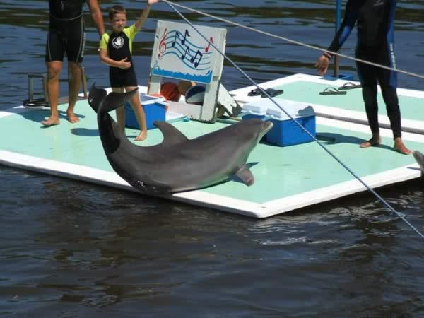 Nado con delfines, Varadero, Cuba