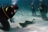 Diving in Playa Levisa