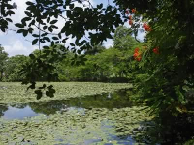 Laguna del Tesoro, Peninsula de Zapata, Cuba