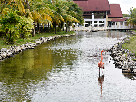 lagoon with pink flamingo and palm trees around