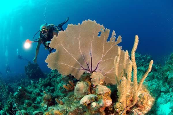 Diving in the coral in Santa Lucia, Camaguey, Cuba