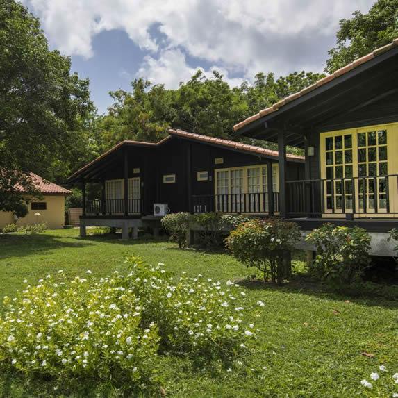 bungalows de madera rodeados de vegetación