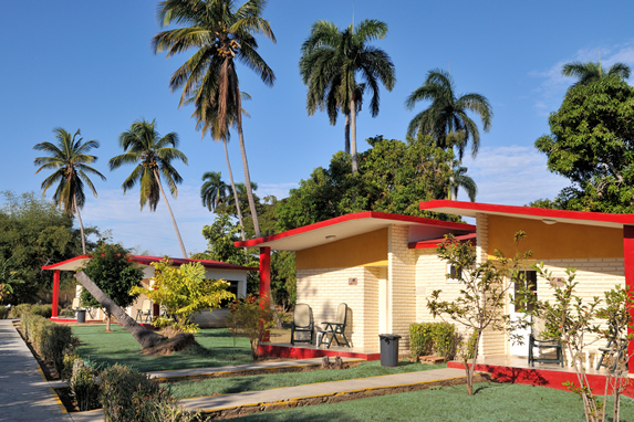 bungalows surrounded by palm trees and vegetation