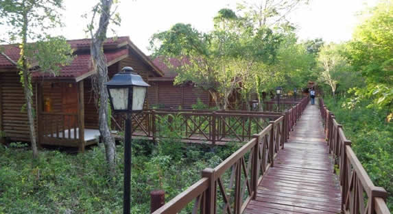 wooden bungalows surrounded by greenery