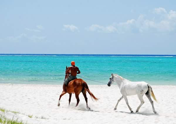 horseback riding cayo largo