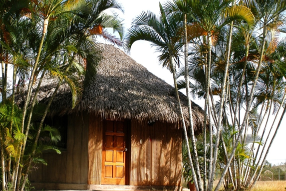 guano cabin surrounded by palm trees