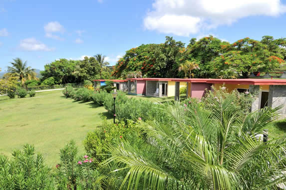 cabins next to palm trees and grass