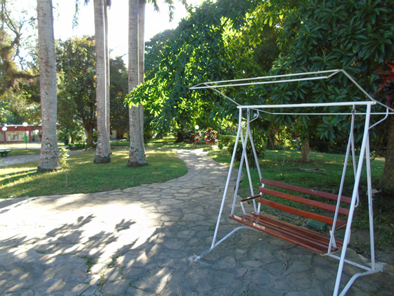 swing in the garden surrounded by greenery