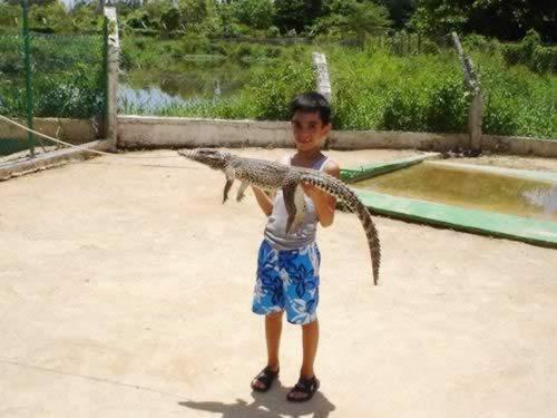 Crocodile farm, Cienaga de zapata, cuba