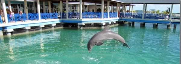 dolphinarium , Cayo Santa María,Cuba
