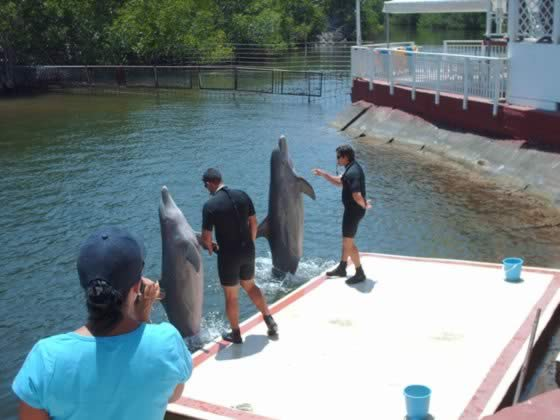 Dolphinarium,Cienfuegos, Cuba