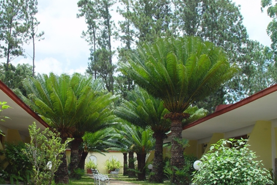 hotel exterior surrounded by pine trees and palms