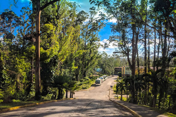 Entrance street surrounded by pine trees