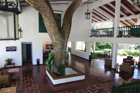 tree inside open lobby with furniture