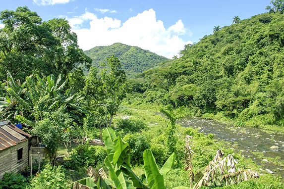 mountains with dense vegetation under the blue sky