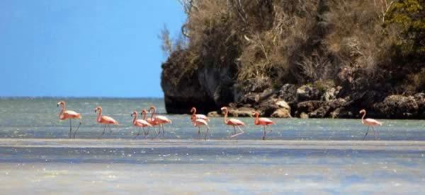 Caguanes National Park, Santi spiritus, Cuba