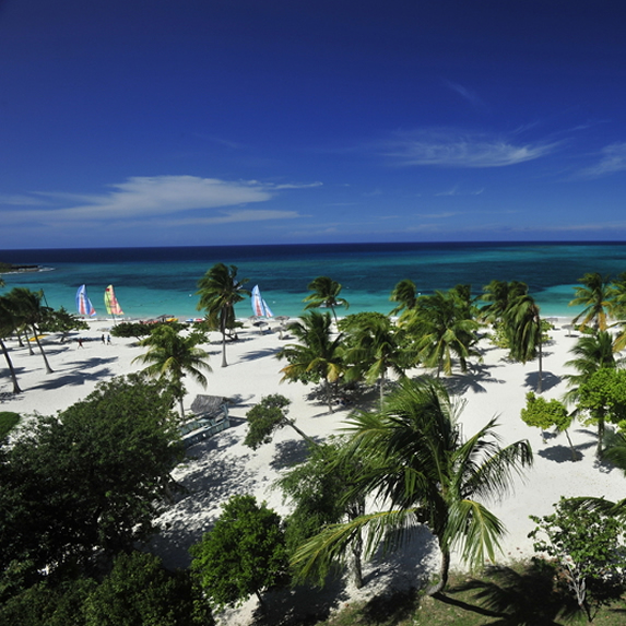 aerial view of the beach surrounded by palm trees