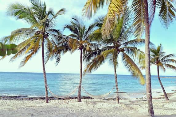 beach with palm trees and hammocks