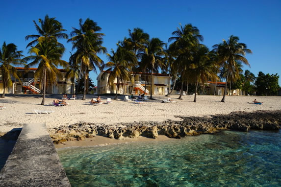 rocky beach surrounded by palm trees