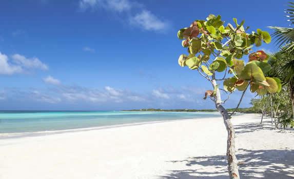 playa desierta con plantas de uva caleta