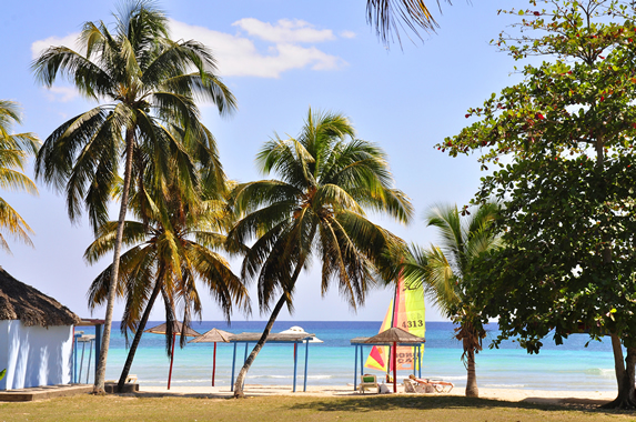 view of the beach surrounded by palm trees