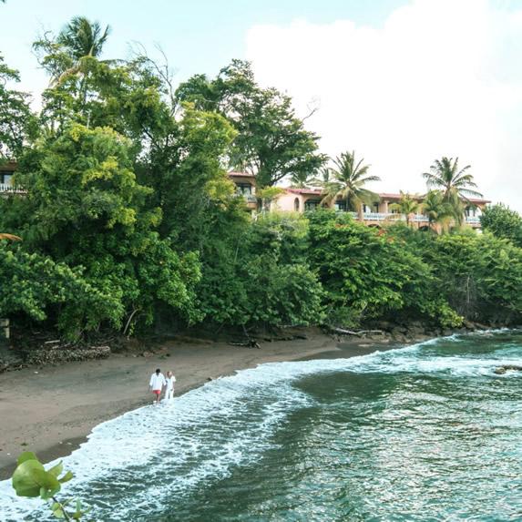 playa rodeada de abundante vegetación