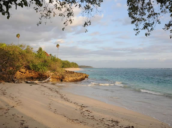playa de arena dorada y abundante vegetación