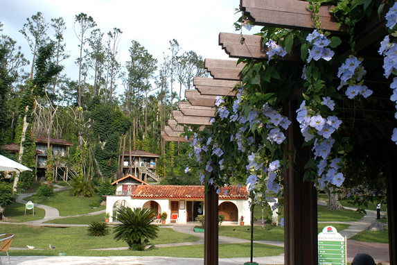 general view of the hotel with cabins and greenery